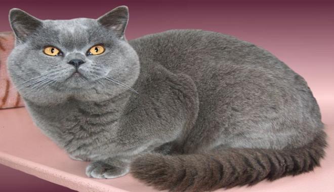 Zdjęcie znalezione na Catsofaustralia.com