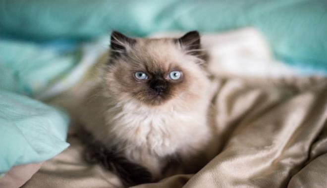 Zdjęcie znalezione na Cattime.com
