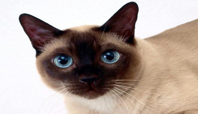 Zdjęcie znalezione na Pinterest.com