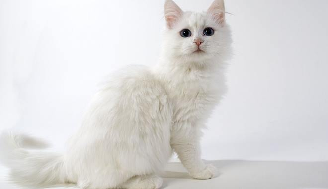 Zdjęcie znalezione na Pets4homes.co.uk