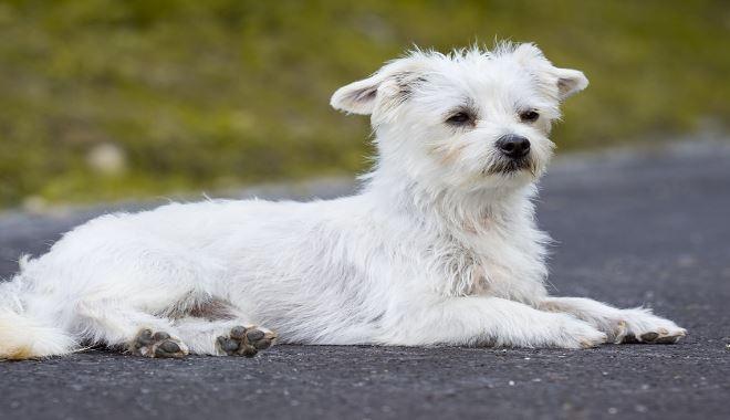 psy, atlas psów, atlas zwierząt, świat zwierząt, psiaki, szczenięta, zwierzęta domowe, zwierzęta